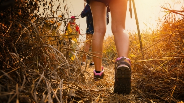 Hikers walk down a nature trail.