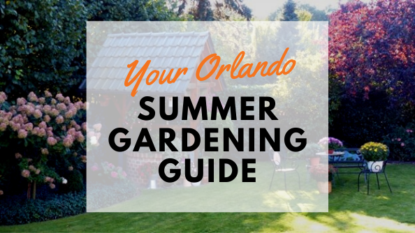 Learn tips and tricks to make your summer garden in Orlando bloom